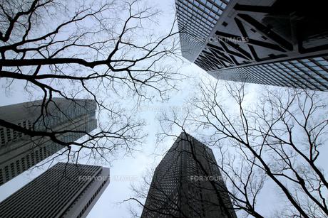 クールな色彩に統一された新宿の高層ビル群の写真素材 [FYI01235471]
