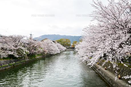 春の京都 岡崎を流れる疎水の写真素材 [FYI01235774]