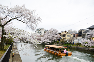 春の京都 岡崎を流れる疎水の写真素材 [FYI01235776]