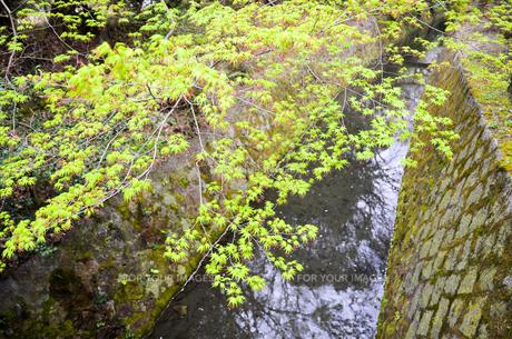 京都 新緑の哲学の道の写真素材 [FYI01235781]