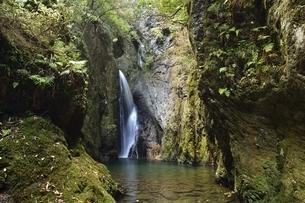 岐阜県郡上市 釜ヶ滝の三の滝の写真素材 [FYI01235826]