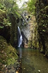 岐阜県郡上市 釜ヶ滝の三の滝の写真素材 [FYI01235830]
