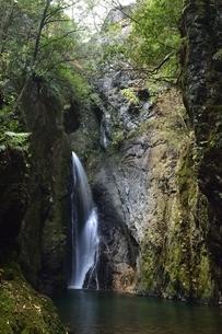 岐阜県郡上市 釜ヶ滝の三の滝の写真素材 [FYI01235832]