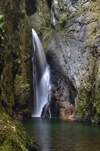 岐阜県郡上市 釜ヶ滝の三の滝の写真素材 [FYI01235833]