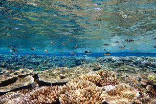 珊瑚と熱帯魚の写真素材 [FYI01235940]