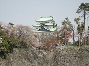 名古屋城の写真素材 [FYI01236021]