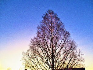 夕方と夜の間の写真素材 [FYI01236029]
