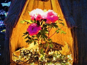 夜に咲くキラキラの花の写真素材 [FYI01236037]
