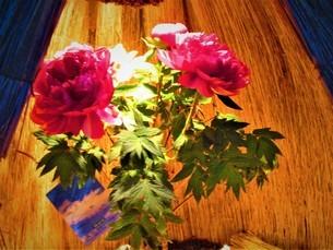 夜に咲くキラキラの花の写真素材 [FYI01236038]