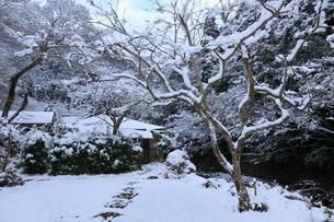 京都清滝の雪景色の写真素材 [FYI01236092]