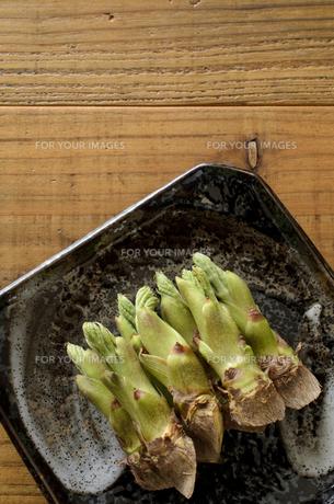 タラの芽の写真素材 [FYI01236106]