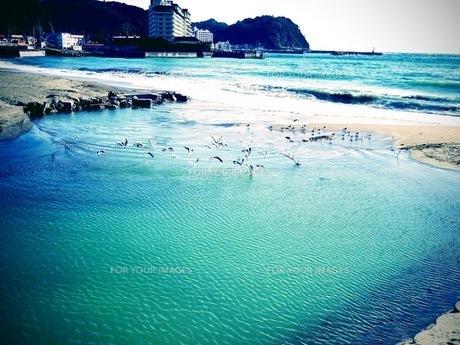 海と鳥たちの写真素材 [FYI01236304]