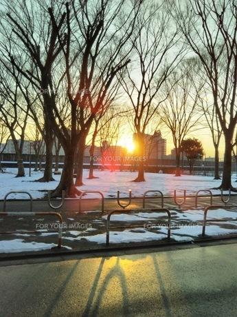 公園の夕日の写真素材 [FYI01236310]
