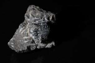 化石の写真素材 [FYI01236321]
