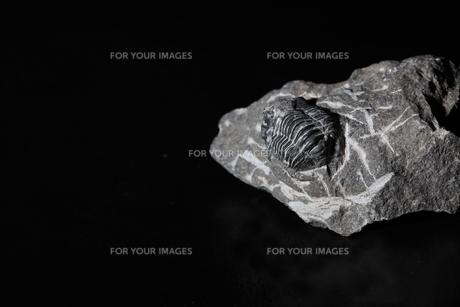 化石の写真素材 [FYI01236322]