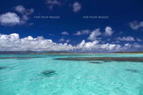 南の島のサンゴ礁の写真素材 [FYI01236415]