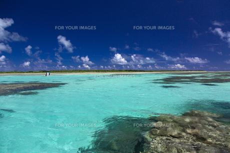 南の島のサンゴ礁の写真素材 [FYI01236417]