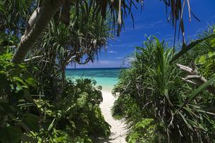 南の島の隠れビーチの写真素材 [FYI01236447]