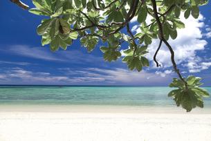 南の島の隠れビーチの写真素材 [FYI01236450]