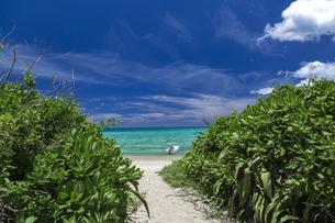 南の島の隠れビーチの写真素材 [FYI01236454]