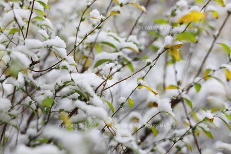 千葉県 本土寺の境内の雪景色の写真素材 [FYI01236561]