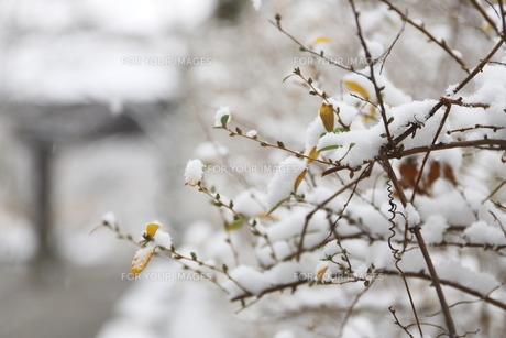 千葉県 本土寺の境内の雪景色の写真素材 [FYI01236573]