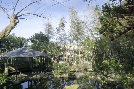 公園の池と木々の写真素材 [FYI01236782]