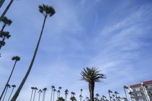 空と公園のヤシの木の写真素材 [FYI01236783]