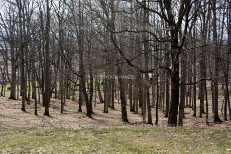 春の公園の写真素材 [FYI01236860]