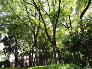 公園の写真素材 [FYI01236864]