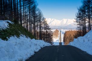 早春の道路の写真素材 [FYI01236868]