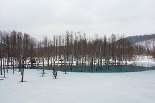 早春の湖 美瑛町の写真素材 [FYI01236899]