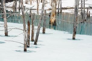 早春の湖 美瑛町の写真素材 [FYI01236902]