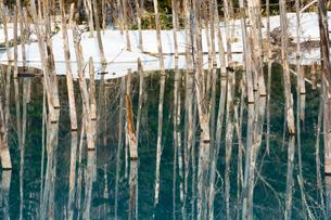 早春の湖 美瑛町の写真素材 [FYI01236914]