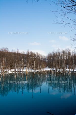 早春の湖 美瑛町の写真素材 [FYI01236915]