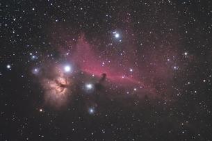 馬頭星雲の写真素材 [FYI01236954]