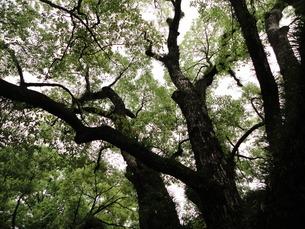 森林の写真素材 [FYI01237091]