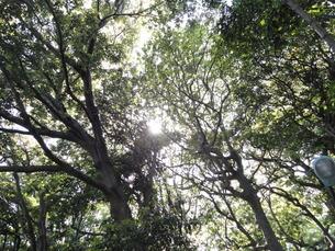 森林の写真素材 [FYI01237094]