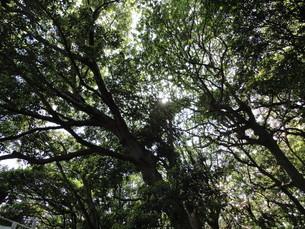 森林の写真素材 [FYI01237095]