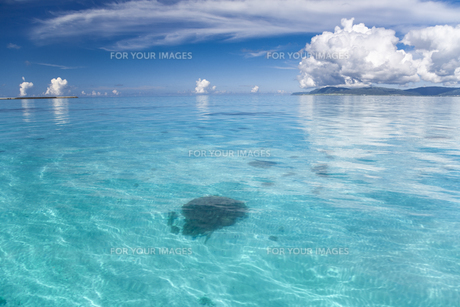 南の島のサンゴ礁の海の写真素材 [FYI01237155]