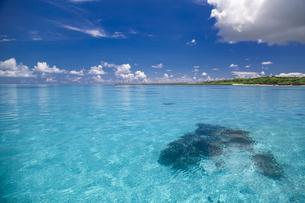 南の島のサンゴ礁の海の写真素材 [FYI01237183]