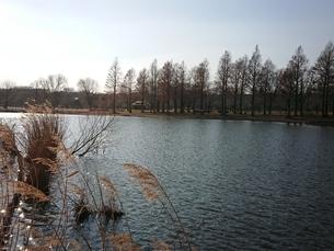 池、湖の写真素材 [FYI01237309]