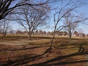 木枯らし、強風、枯れ木の写真素材 [FYI01237311]