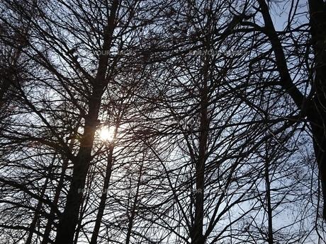 林、森、雑木林の写真素材 [FYI01237312]