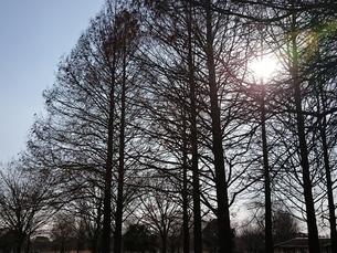 林、森、雑木林2の写真素材 [FYI01237313]