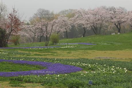春の公園の写真素材 [FYI01237318]