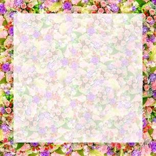 花の写真素材 [FYI01237343]