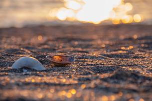 貝殻の写真素材 [FYI01237392]