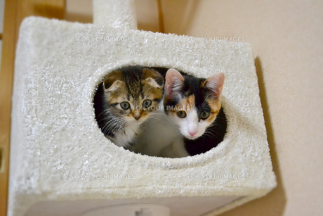 穴から覗く猫の写真素材 [FYI01237599]