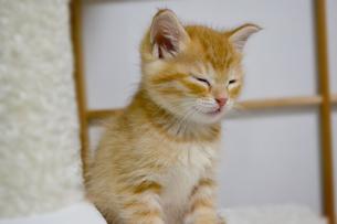 寝る子猫の写真素材 [FYI01237601]